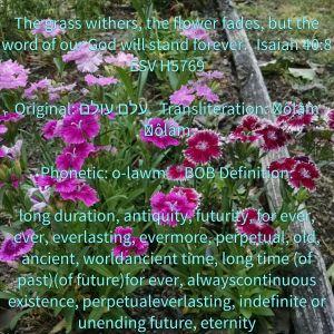 Isaiah 40 8 flowers